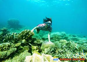 under water in karimun jawa