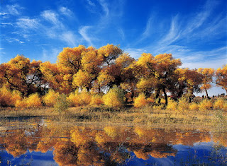 Golden Euphratica, enjoy it in your China leisure tour to Dunhuang in the best time.