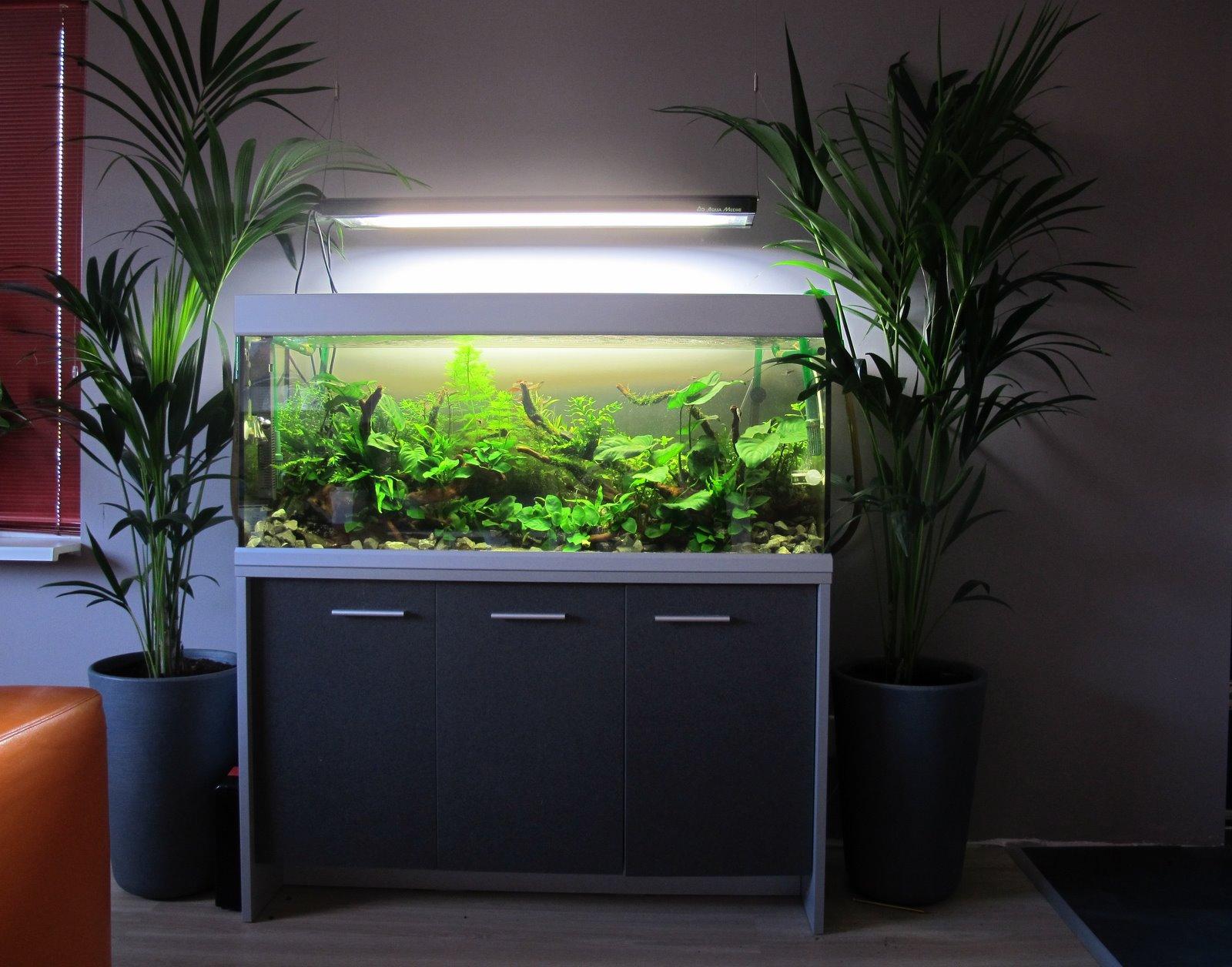Aquarium for Aquarium 120x40x50