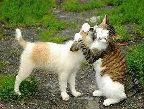 Anjing Dan Kucing Lucu Banget Gambar Gambar Aneh
