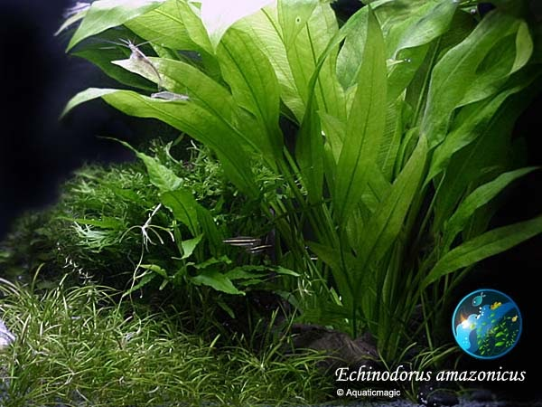 Welcome to for Underwater pond plants