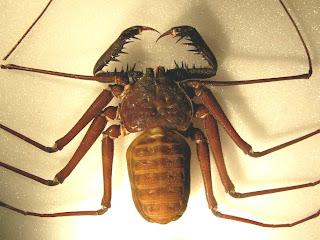 foto gambar laba-laba karnivora