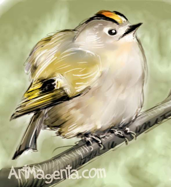 Goldcrest by ArtMagenta.com