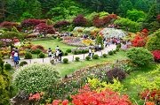 เทศกาลดอกไม้ Spring Festival