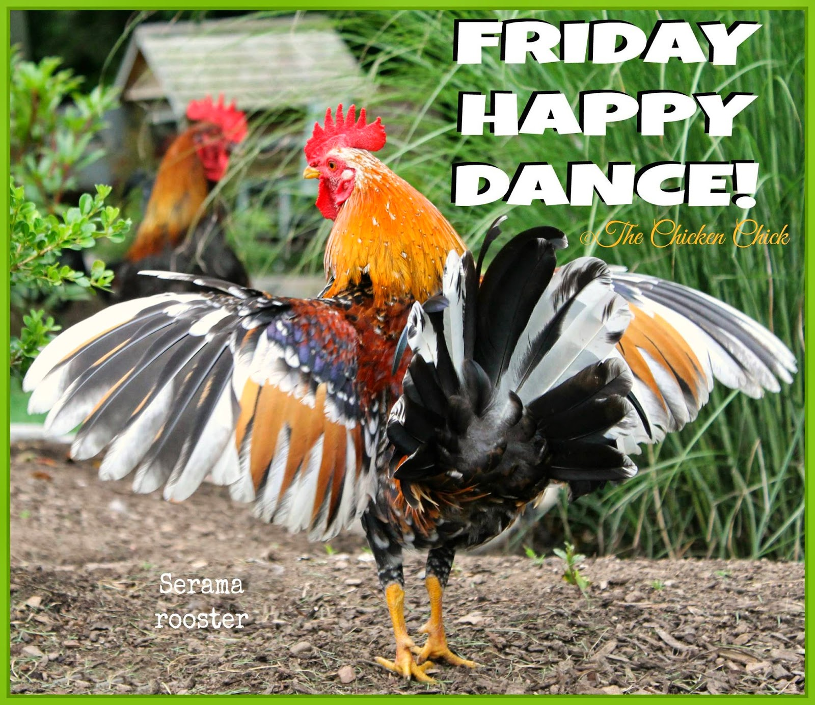 Friday Happy Dance