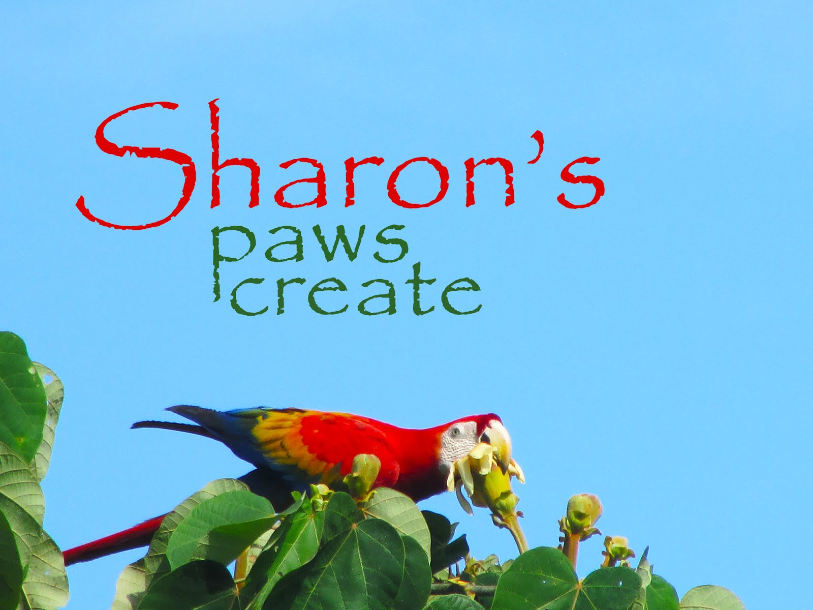 Sharon's Paws Create
