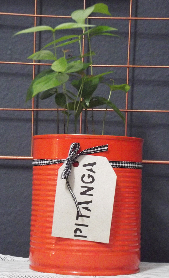 vaso de planta, vaso, reciclagem, faça você mesmo, diy, lata, lata reciclada, lata pintada, tinta spray