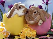 Fondo de Conejos de Pascua. Labels: Conejos, Fondos de Pantalla, . conejo de pascua