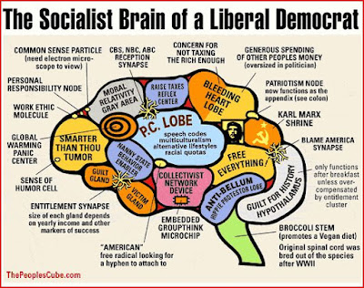the liberal democrat brain