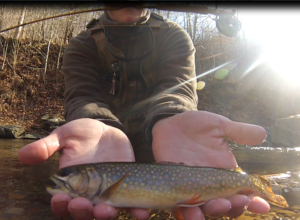 Fly Fishing for Native Brookies