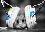 Non vivo senza musica!