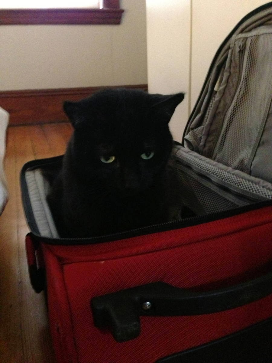 Funny cats - part 92 (40 pics + 10 gifs), cat sits in suitcase