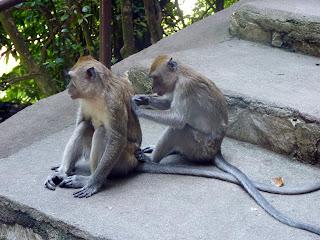 Monos desparasitándose en las batu caves