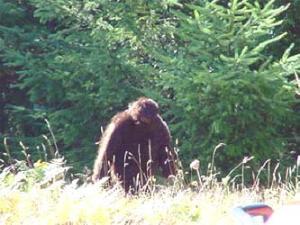 Ilmuwan Temukan Sarang Monster Bigfoot