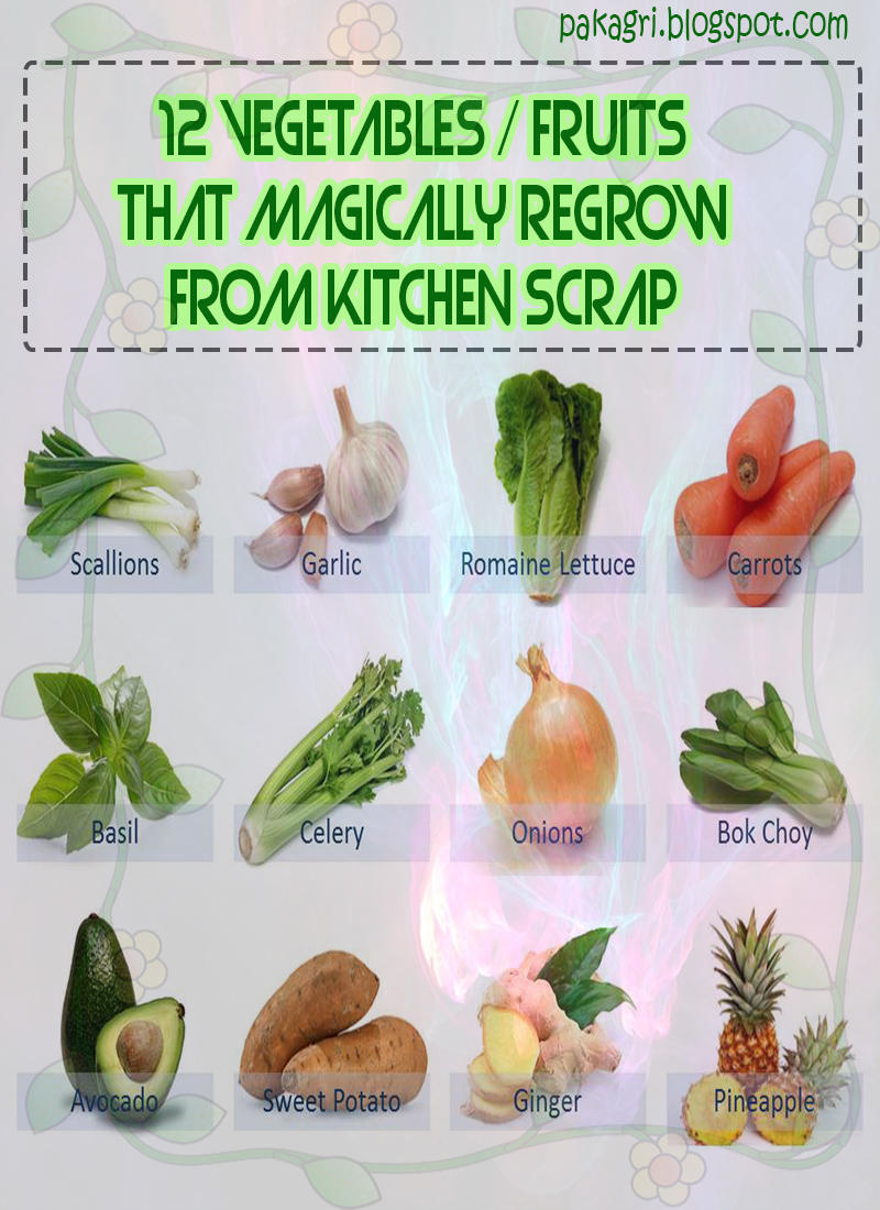 1000 images about gardening from kitchen scraps on for What vegetables to grow