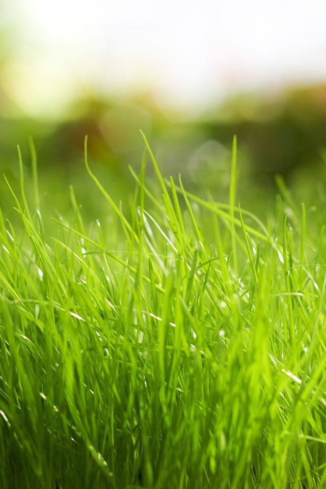 Iphone+4s+Grass En Güzel İphone 4s Resimleri