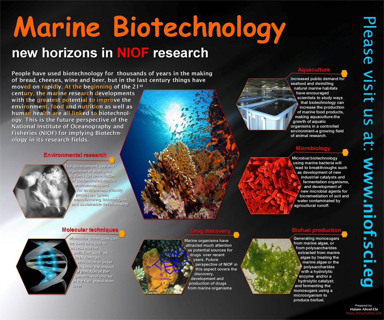 marine organism potential source for drug Marine organisms: potential source for drug discovery - free download as pdf file (pdf), text file (txt) or read online for free.