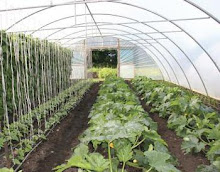 professional poly tunnel