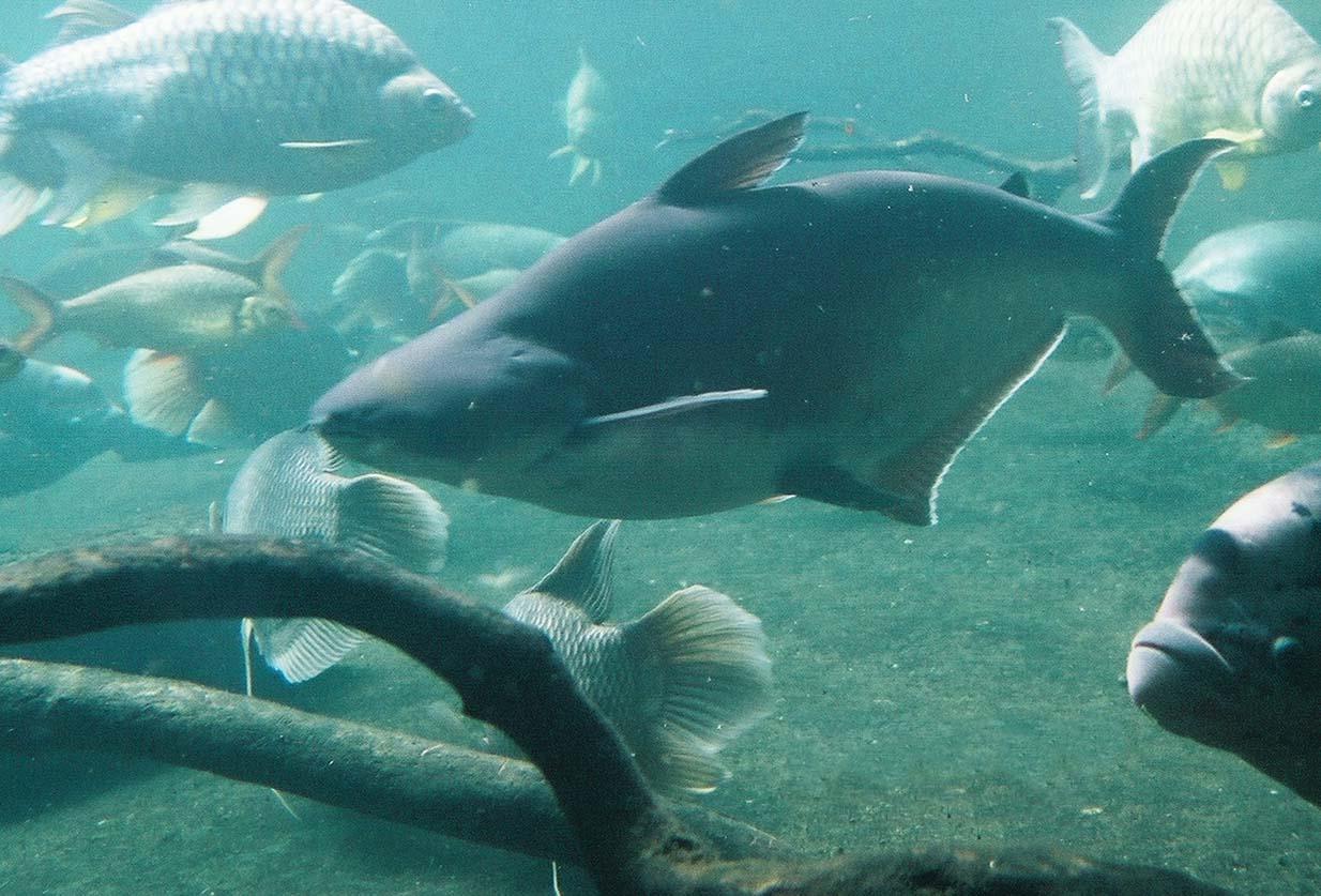 http://1.bp.blogspot.com/-Z4JH8tG_F5s/T_zppUaVbeI/AAAAAAAAGcQ/v4ms5i4EsiQ/s1600/Iridescent_shark.jpg