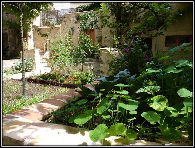 Chambre Hôte Fleur de soleil La Closerie des 3 Marottes Melun potager