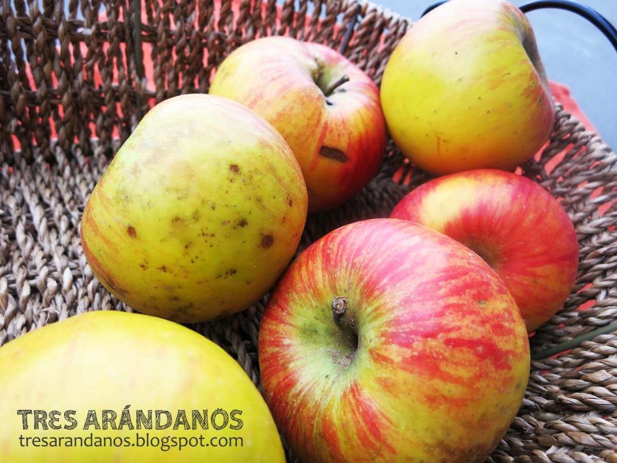manzanas de cultivo ecologico