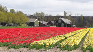 Flower fields - Lisse