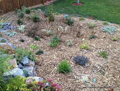 Rain garden after adding mulch