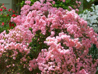 #8 Stunning Flowers Blooming