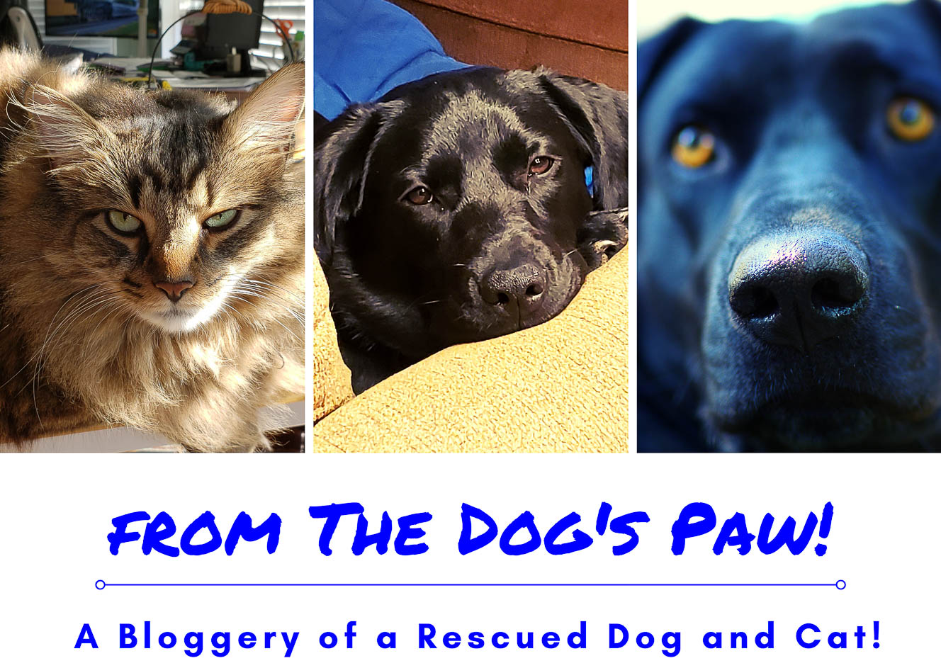 from the Dog's Paw- A Bloggery of a Rescued Dog and Cat