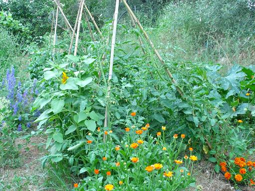 Huerto jardin ecologico dise ando el huerto jardin for Plantas hortalizas ejemplos