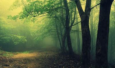 Τα πιο τρομακτικα δάση του κόσμου. Μάθε την…. ανατριχιαστική ιστορία τους!