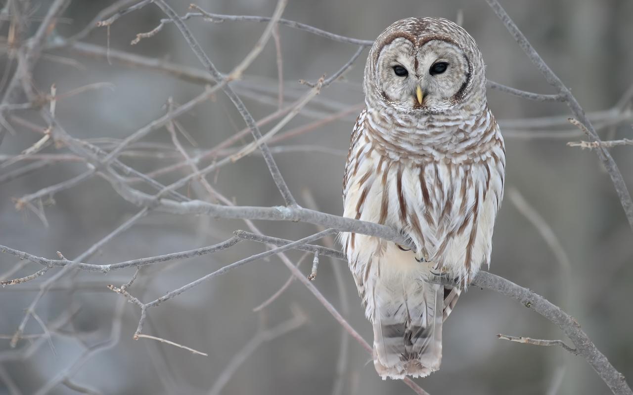 http://1.bp.blogspot.com/-Z5wdhQbO9WE/UBe2ieDrPGI/AAAAAAAAFAU/RqaEiU_T2Ow/s1600/Owl+Wallpapers.jpg