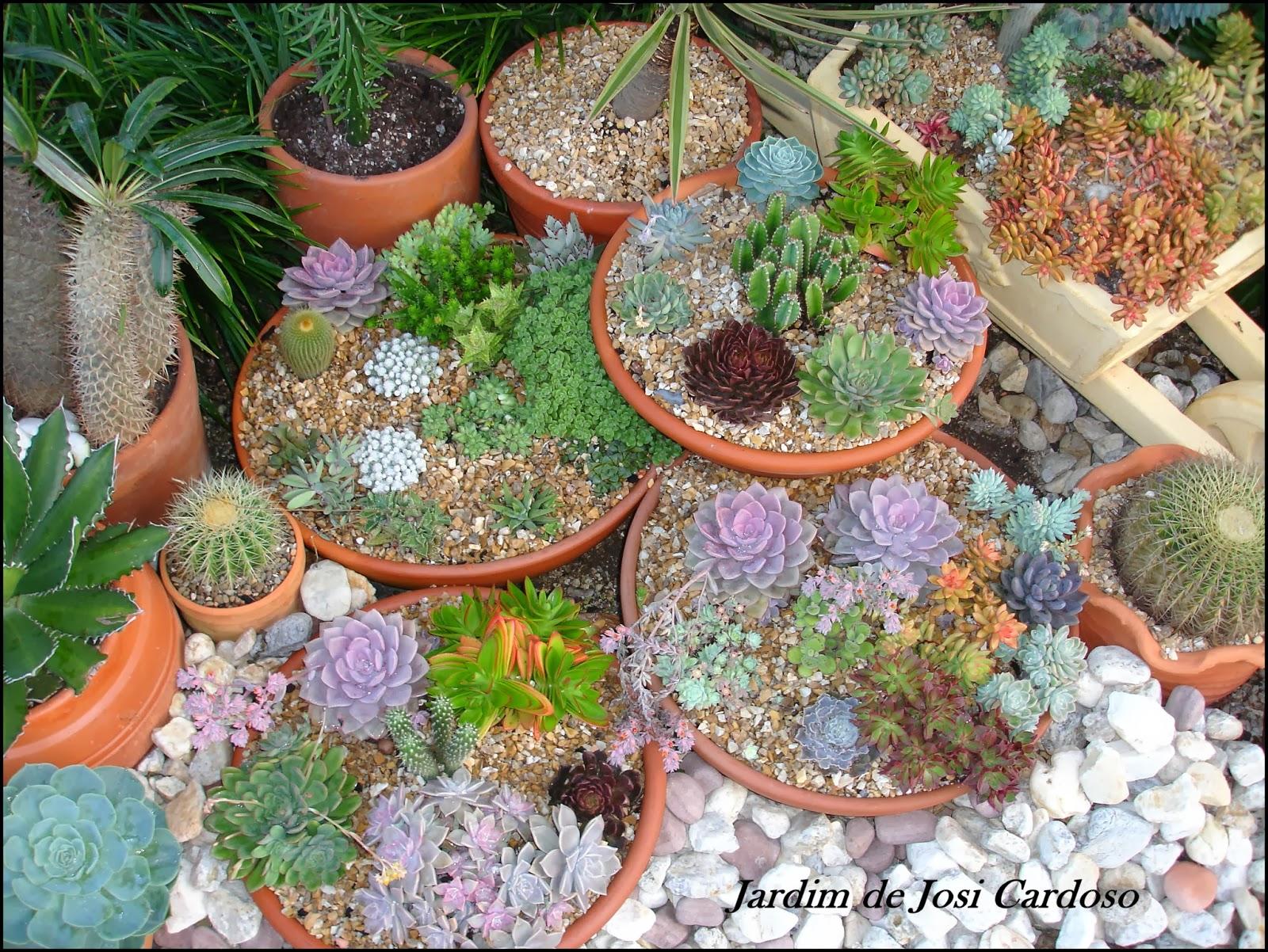 plantas de jardim resistentes ao sol:Jardim de Josi Cardoso: Dicas para Deixar as Suculentas Mais Bonitas e