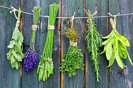 What Herbs & Plants can you smoke? - Smokable Herbs