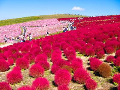 صور مذهلة وخيالية لحديقة الخريف فى اليابان