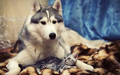 El perro y el gatito - Una linda historia de amor - Mascotas