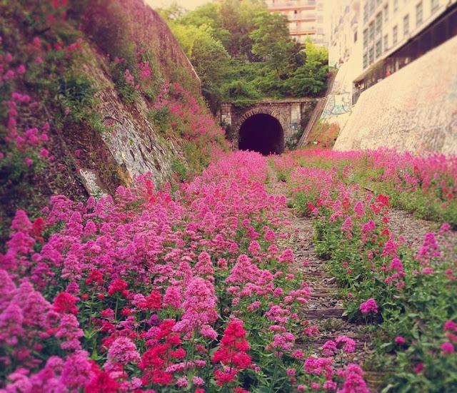 Abandoned / Chemin de fer de Petite Ceinture / Paris /