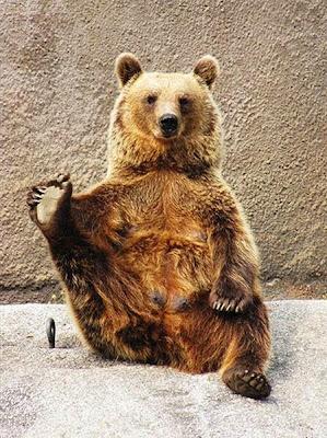 beruang santra4