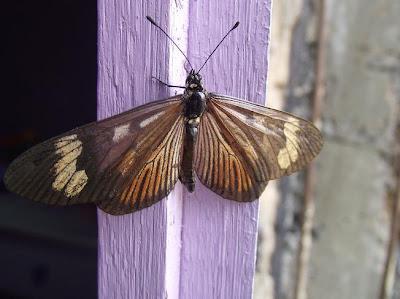 foto de uma borboleta pousada sobre uma janela lilás representando o poema Borboletas de Mário Quintana