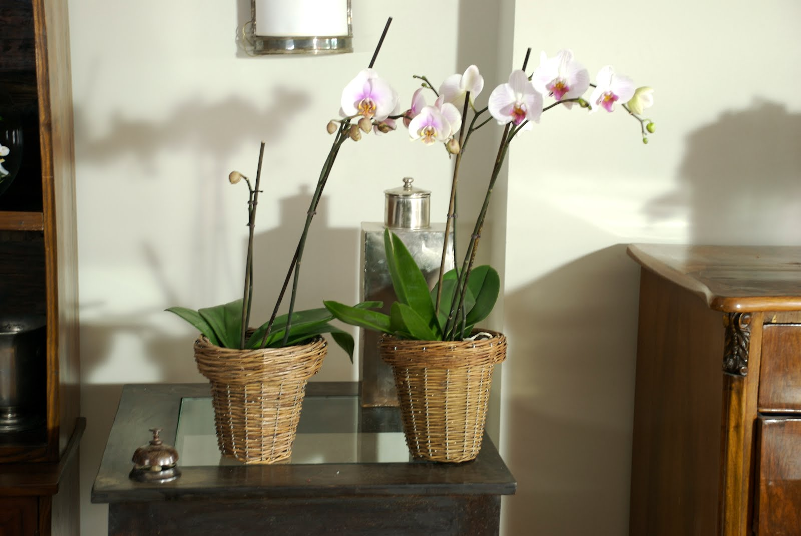 Florister a verdepimienta cuidado de las orqu deas - Como cuidar orquideas en maceta ...