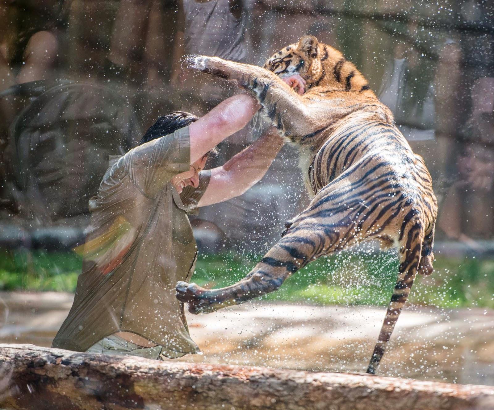 Sunshine Coast Queensland Australia Zoo