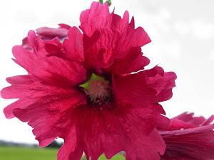 不動産 賃貸 Siteの花