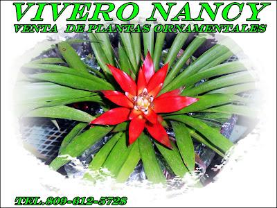 Dj criss vivero nancy venta de plantas ornamentales y for Viveros ornamentales