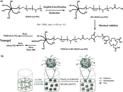 Supramolecular Self-Assembled Nanogels a New Platform for Anticancer Drug Delivery