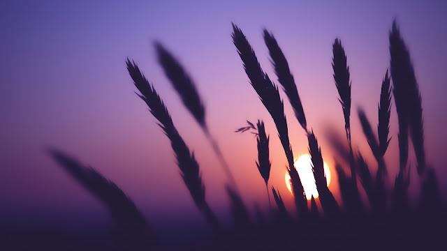 sunset time HD Wallpaper