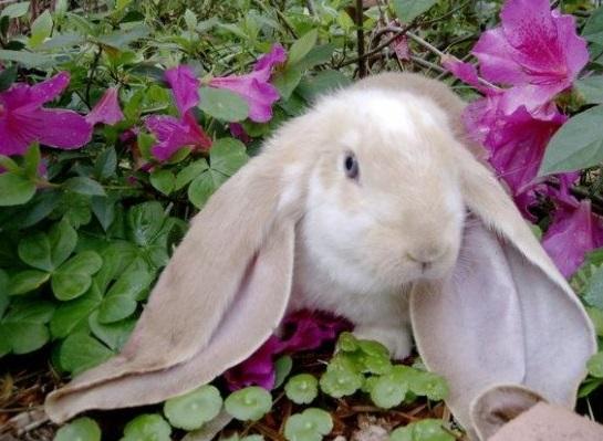 Qué es un conejo - El Mundo de los Animales y Mascotas