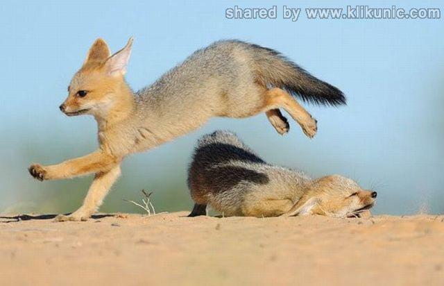 http://1.bp.blogspot.com/-Z982ecA9_fU/TXlom9vOuDI/AAAAAAAAQzQ/Q6ieGt45YOw/s1600/these_funny_animals_635_640_08.jpg