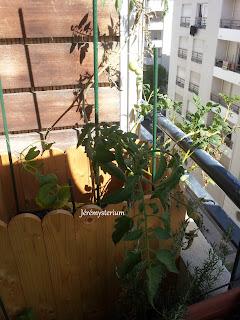 Bac de jardin: patates et tomates!