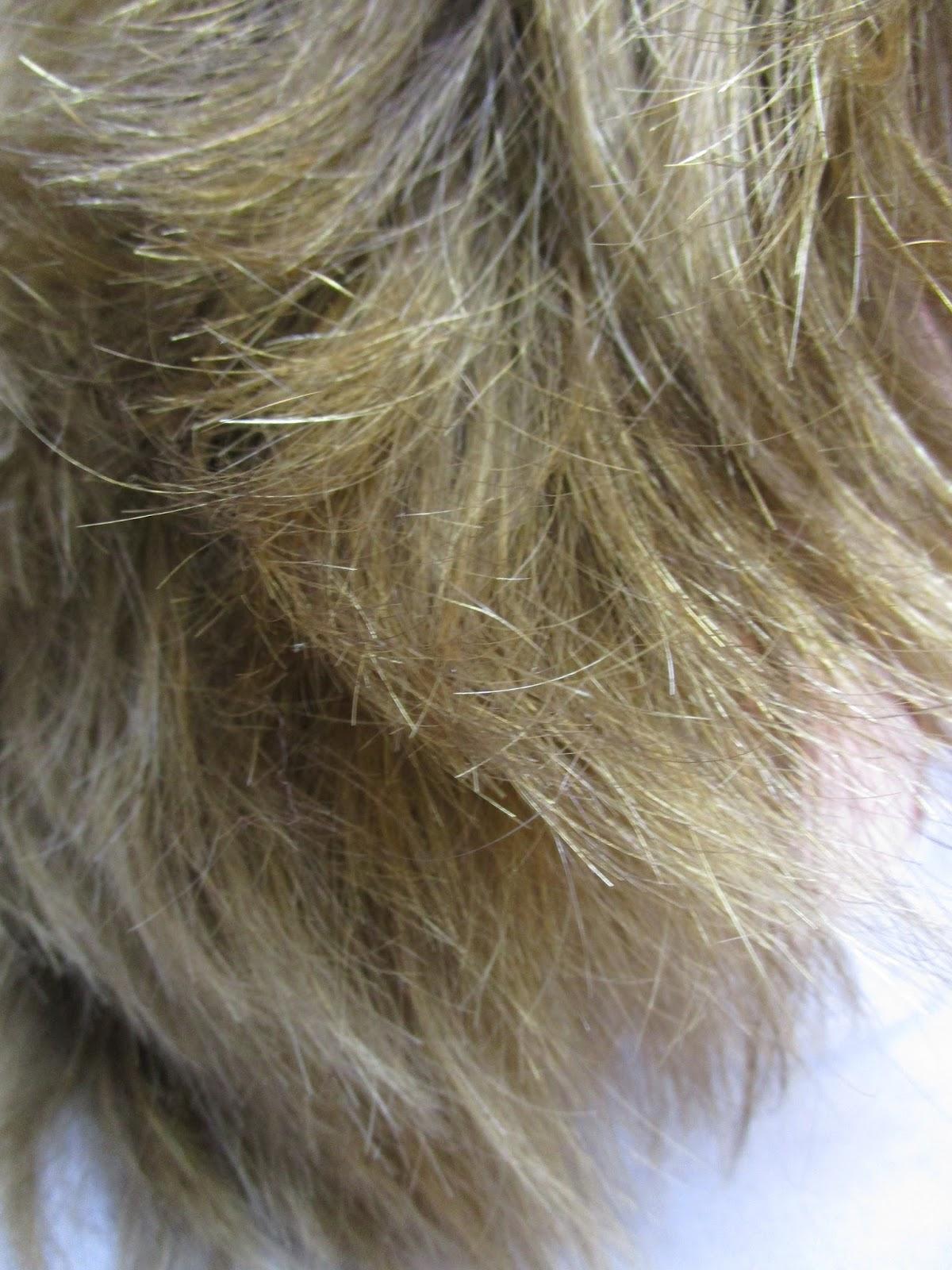 Le masque pour les cheveux avec la poudre de moutarde pour la croissance des cheveu les rappels des