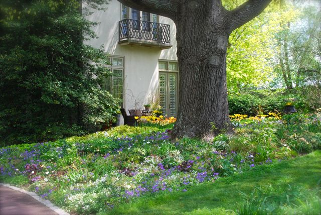 "The Oak Bed sits just to the west of the entrance house at Chanticleer. The yellow tulips are part of the ""West Side"" and ""Lower Courtyard"" gardens."